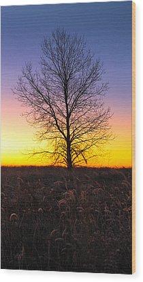 Ellis Island Lone Tree Wood Print by David Yunker