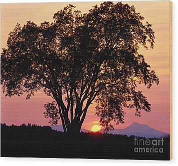 Elm At Sunset Wood Print by Alan L Graham