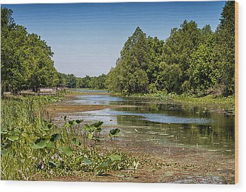 Wood Print featuring the photograph Elm Lake At Brazos Bend In Texas by Zoe Ferrie