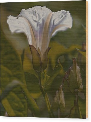 Wood Print featuring the photograph Elsewhere by Leif Sohlman