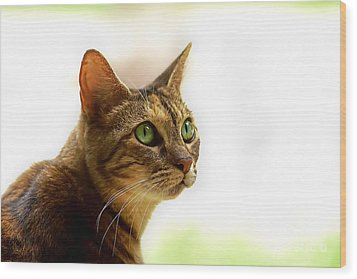 Wood Print featuring the photograph Emerald Eyes by Olga Hamilton
