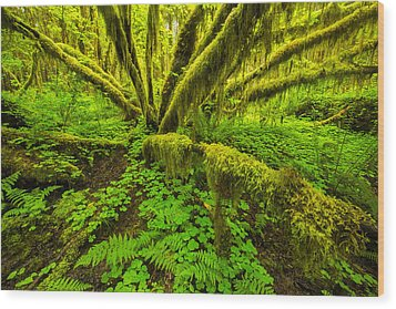 Emerald Hoh Wood Print by Joseph Rossbach