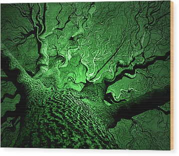 Emerald Snare Wood Print by James Hammen