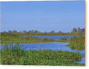 Emeralda Marsh IIi Wood Print by Jodi Terracina
