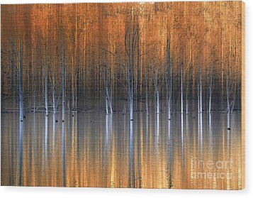 Emerging Beauties Reflected Wood Print by Marco Crupi