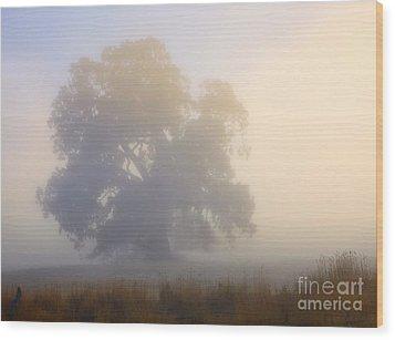 Emerging Wood Print by Mike  Dawson