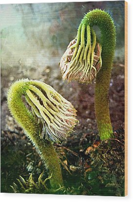 Emerging Sprouts Wood Print by Shirley Sirois