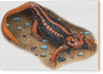 Emperor Newt Wood Print by Roger Hall