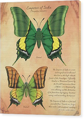 Emperor Of India Butterfly Wood Print by Tammy Yee