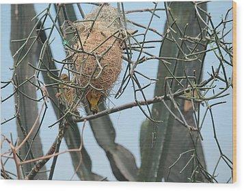 Empty Nest Syndrome Wood Print
