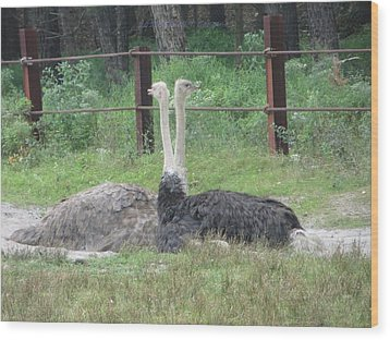 Emu Birds Wood Print by Sonali Gangane