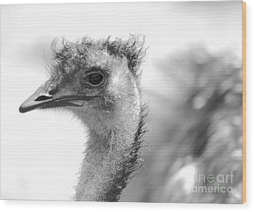 Emu - Black And White Wood Print