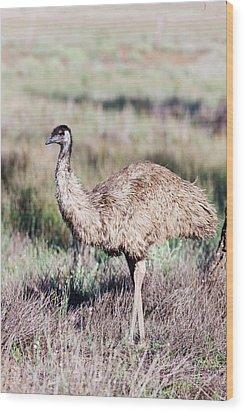Emu (dromaius Novaehollandiae Wood Print by Martin Zwick