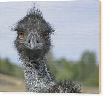 Emu Gaze Wood Print by Belinda Greb