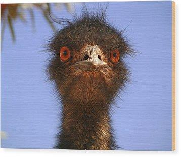 Emu Upfront Wood Print