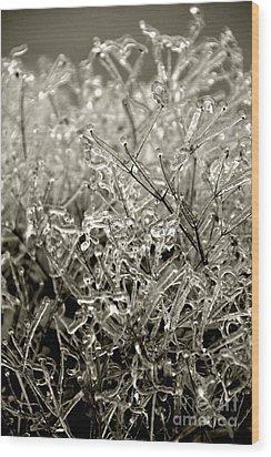 Encased In Ice IIi Wood Print