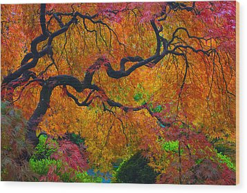 Enchanted Canopy Wood Print