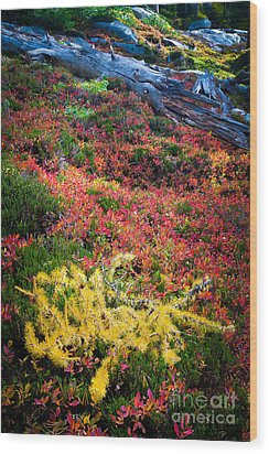 Enchanted Colors Wood Print by Inge Johnsson