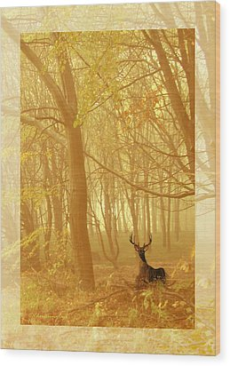 Wood Print featuring the photograph Enchanted Forest by Chris Armytage