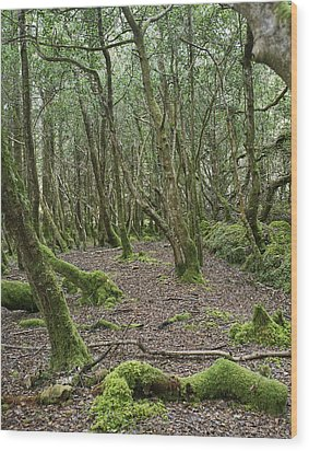 Wood Print featuring the photograph Enchanted Forest by Hugh Smith