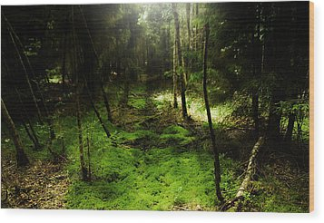 Enchanted Forest Wood Print by Kim Lagerhem