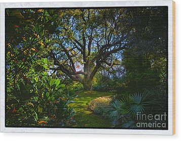 Enchanted Garden Wood Print by Rick Bragan