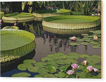 Enchanting Water Garden Wood Print by Byron Varvarigos