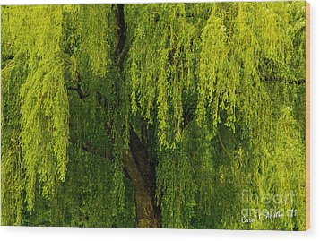 Enchanting Weeping Willow Tree  Wood Print by Carol F Austin