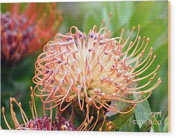 Wood Print featuring the photograph Encompassing Proteas by Mary Lou Chmura