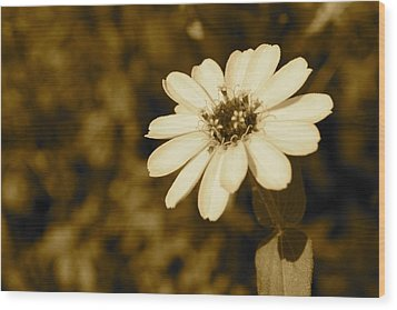 Wood Print featuring the photograph End Of Season by Photographic Arts And Design Studio