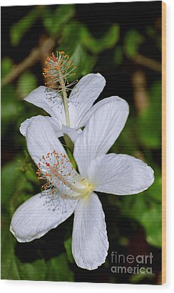 Endangered Koki'o White Hibiscus Wood Print