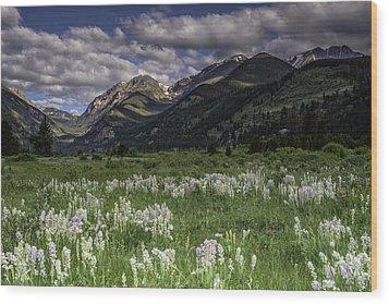 Endo-valley Meadow  Wood Print by Tom Wilbert