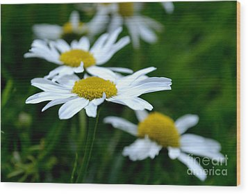Wood Print featuring the photograph English Daisies by Scott Lyons