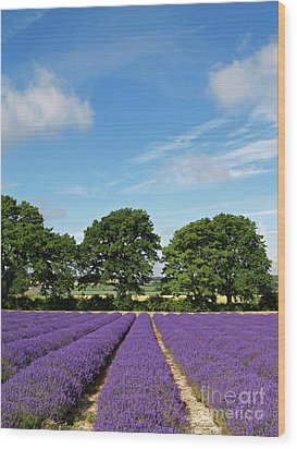 English Lavender Fields Near Selborne Hampshire Wood Print by Alex Cassels