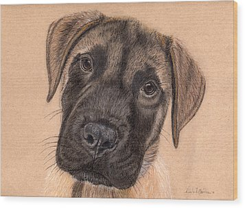 English Mastiff Puppy Wood Print by Nicole I Hamilton