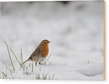 English Robin Wood Print by Ivelin Donchev