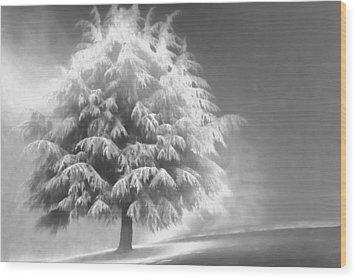 Enlightened Tree Wood Print by Don Schwartz