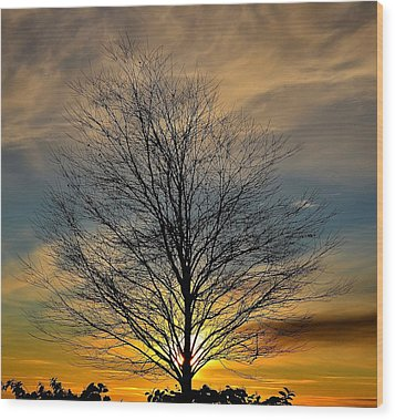 Enlightenment Wood Print by Kathy King
