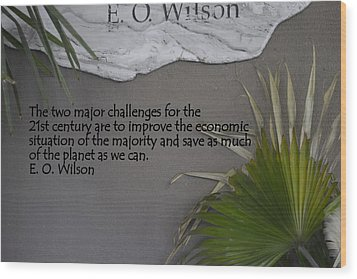 E.o. Wilson Quote Wood Print by Kathy Barney