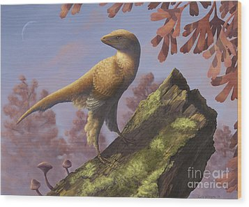 Eosinopteryx Brevipenna Perched Wood Print by Emily Willoughby