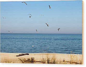 Wood Print featuring the photograph Erie Birds And Beach by Jay Nodianos