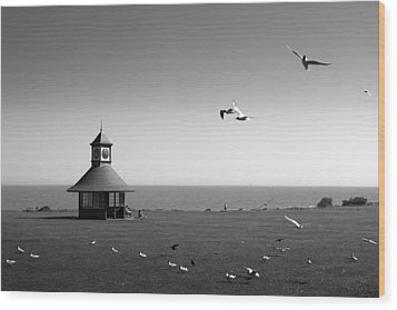 Esplended Gulls Wood Print by David Davies
