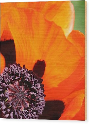 Essence Of Poppy Wood Print by  Andrea Lazar