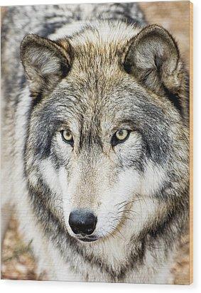 Essence Of Wolf Wood Print by Gary Slawsky