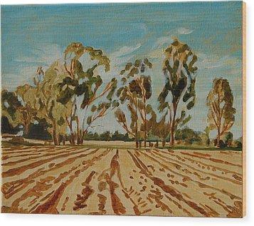 Eucalypus Trees Near Bloemfontein Wood Print