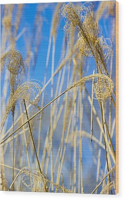 Eulalia Grass Native To East Asia Wood Print by Anonymous