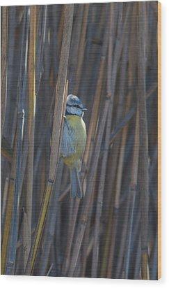 Wood Print featuring the photograph Eurasian Blue Tit - Parus Caeruleus by Jivko Nakev