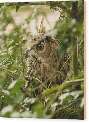 Eurasian Eagle-owl 2 Wood Print