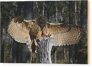 Eurasian Eagle Owl Coveting His Prey Wood Print by Paulette Thomas