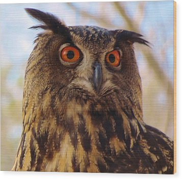 Eurasian Eagle Owl Wood Print by Cynthia Guinn
